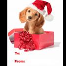 15P7 - Christmas Dog